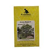 Semilla acacia mangium sb x 1 gramo