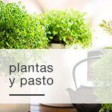 Jardín y Plantas