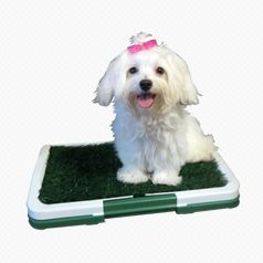 Productos de Aseo para Perros