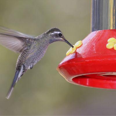 Comederos y Bebederos para Aves