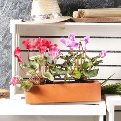 Matera jardinera 10 x 35 cm