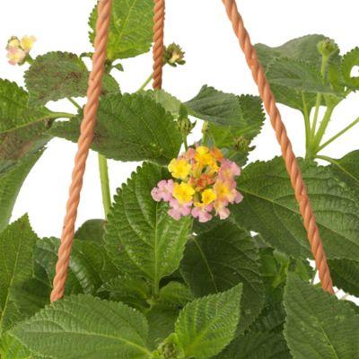 Planta Colgante Mediana Flor