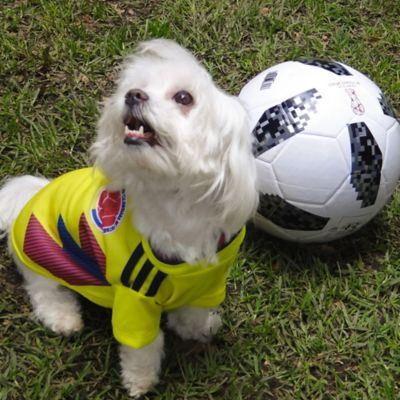 Camiseta de Colombia para Perro Talla L Amarillo