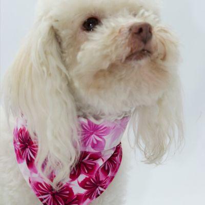 Pañoleta Flores para Perro Talla XL Magenta