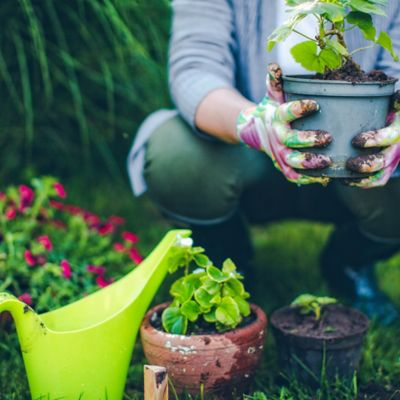 Asesoría virtual en Jardinería