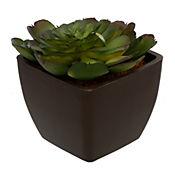 Planta artificial crasula grande 9.5 x 9.5 x 11 cm