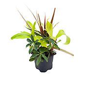 Planta Surtida P7