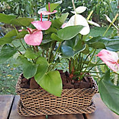 Jardinera Calima #35 Terracota