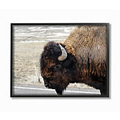 Cuadro en Lienzo Enmarcado de Buffalo 28x36