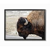 Cuadro en Lienzo Enmarcado de Buffalo 41x51