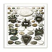 Cuadro Decorativo Nidos y Huevos Placa 32x47