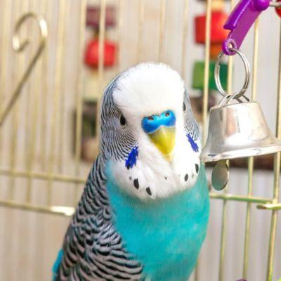 Productos para Aves