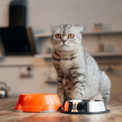 Alimento y Snacks para Gatos