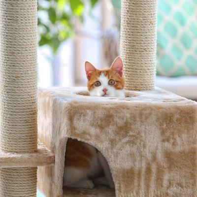 Rascadores y Gimnasios para Gatos