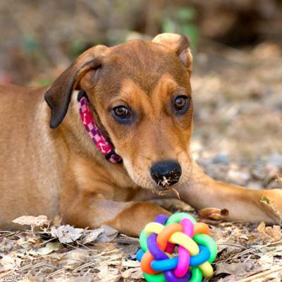 Juguetes, Ropa y Collares para Perros