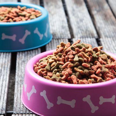 Comederos, Aseo y Accesorios para Perros