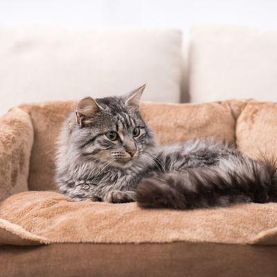 Casas, Guacales y Camas para Gatos