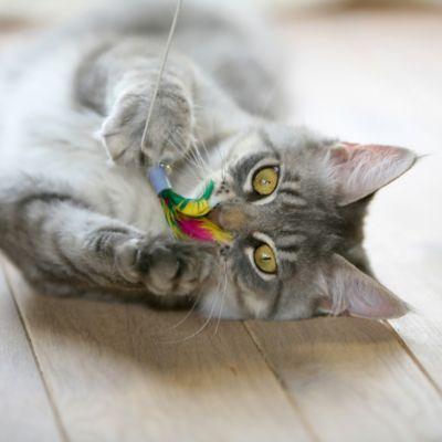 Collares y Juguetes para Gatos