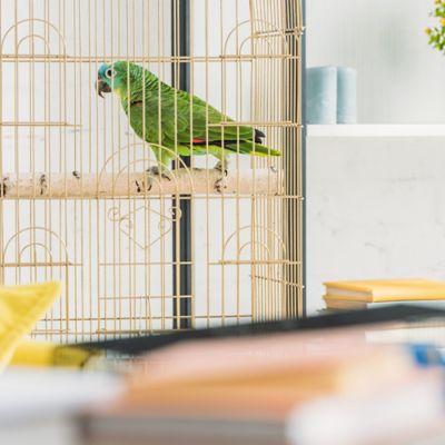 Jaulas y Accesorios para Aves